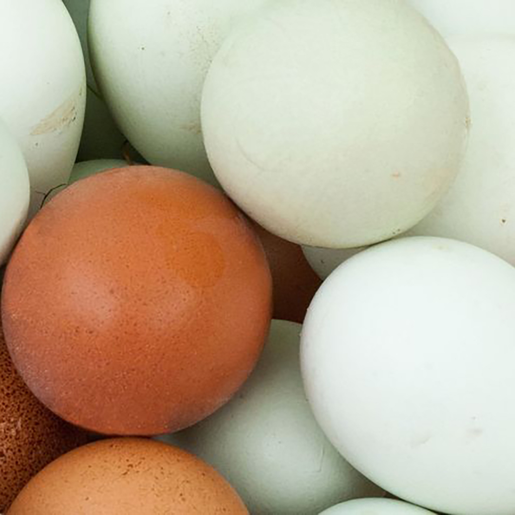 Feather Tips - Egg Shells
