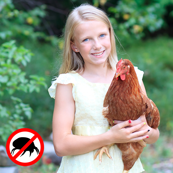 Feather Tips - Keep Healthy Hens